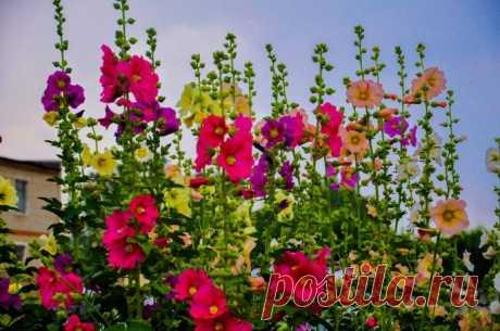 Цветы у подъезда многоквартирного дома - какие лучше посадить, чтобы цвели и радовали