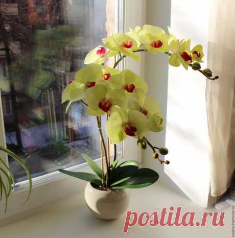 Девять правил, благодаря которым орхидея будет активно цвести круглый год