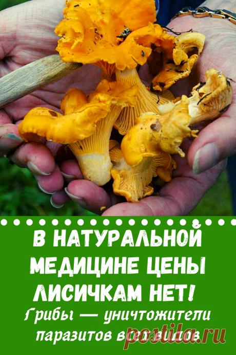 Все очень просто, эти грибы содержат вещество хиноманнозу, которое не переносят жучки, червячки и даже гельминты всех видов. Вещество это капризное, тепловую обработку не выносит