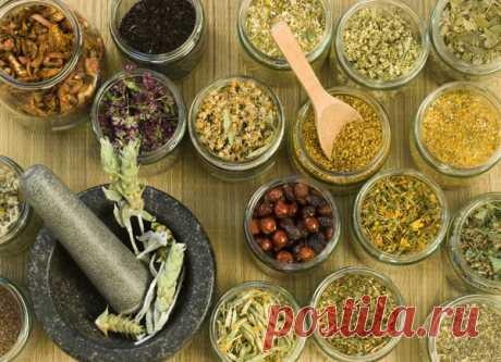 Рецепт Настойки Древнего Китая, которая заглушает душевную Боль! | Samovar | Яндекс Дзен