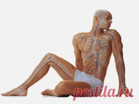 Rejuvenation of endocrine system
