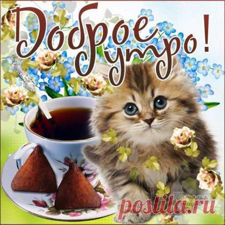 Милое утреннее пожелание картинка Доброе утро музыкальная открытка с фразами