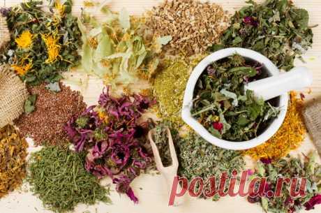 Противопоказания целебных трав — знать, чтобы не навредить здоровью!