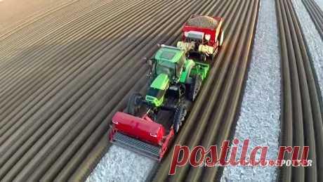 Как садят картошку в Голландии ...