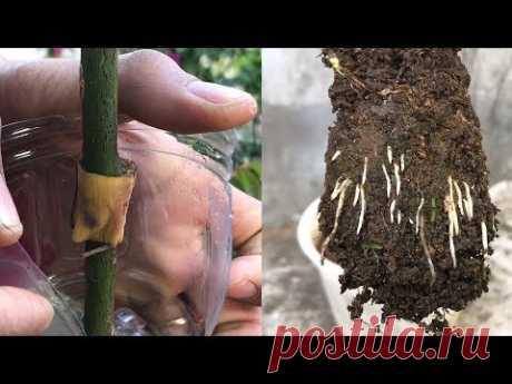 Распространение быстро выросло благодаря банановой кожуре | Эффект банановой кожуры