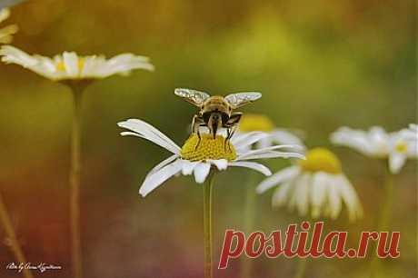 - Профиль пользователя - фото.сайт - Photosight.ru
