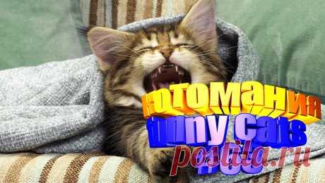 коты смешные видео, видео смешных котов, коты смешное видео, смешное видео кот, кот том видео, приколы коты видео, видео кот, видео котов приколы, кота видео, смешные животные, смешные видео животных, смешное про животных, смешно животные, видео коте, коте видео, кот приколы, прикол коты, коты и приколы, видео смешные кошки, смешная кошка, смешное видео кошек, про кошек смешных, смешное видео кошка, кошка смешная видео, видео кошек смешные, смешные кошки и, видео про кошек, про кошку видео