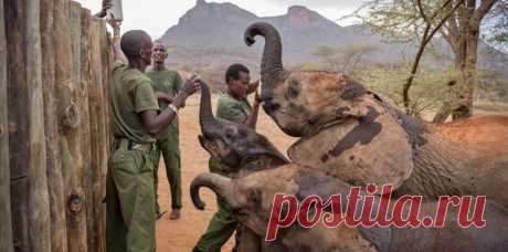 У #африканских #героев свои заботы: они спасают маленьких слонят! Расширяем кругозор!