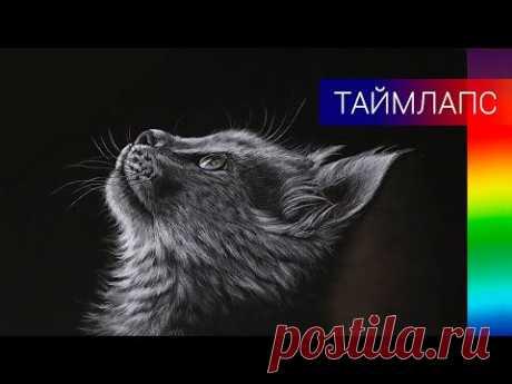 Как нарисовать котёнка цветными карандашами ✎ Серый котёнок на чёрном фоне 👍 Таймлапс