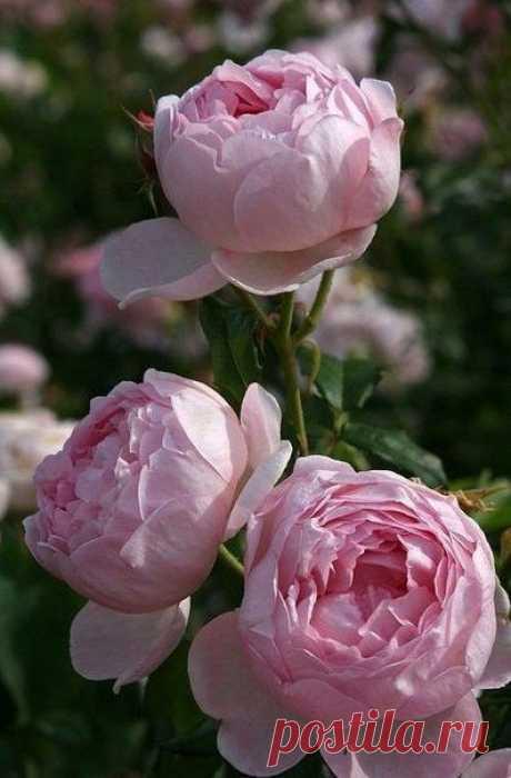 В каждом из нас цветет душа.Она рождается крохотным бутоном, покрывается шелковыми лепестками и распускается весной в ожидании солнечных поцелуев.