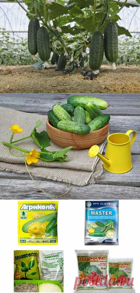 Подкормка для огурцов.  Огурец не зря снискал всенародную славу — в нём удачно сочетаются зелёный свежий аромат, хрусткость, сочность и низкая калорийность. Питательность этого овоща, правда, совсем небольшая: состоящие на 95-96 %  из воды, огурцы  включают всего до 2,5 % сaхаров, 1% белковых веществ, 0,1% жира и витaмины А, В, С и Р. Но зато съесть их можно, сколь душе пожелается — и веса не набрать!