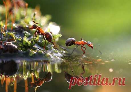 Как избавиться от муравьев в огороде   Красивый Дом и Сад