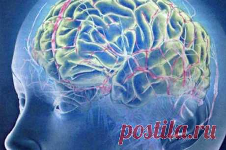 """Причины ускоренного старения мозга По мере старения ухудшается не только физическое состояние, но и работа мозга. Мыслительный орган теряет нейронные связи, хуже снабжается кровью и подвергается все более выраженным воспалительным процессам, в результате чего снижаются когнитивные способности. Ученые, как пишет """"Популярная..."""