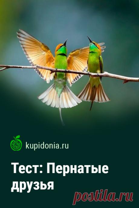Тест: Пернатые друзья. Интересный тест о птицах, которые населяют нашу планету. Проверьте свои знания!