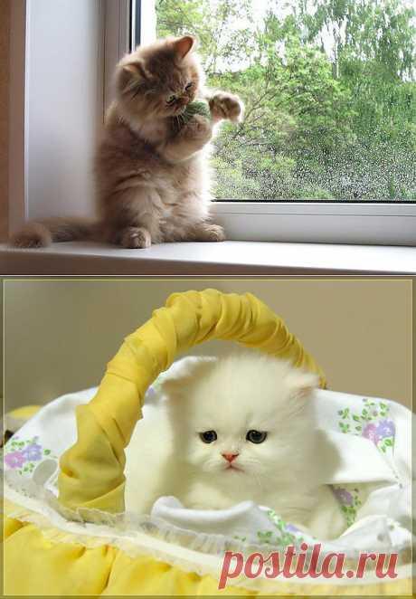 Фото котят. Породы котят с фото.