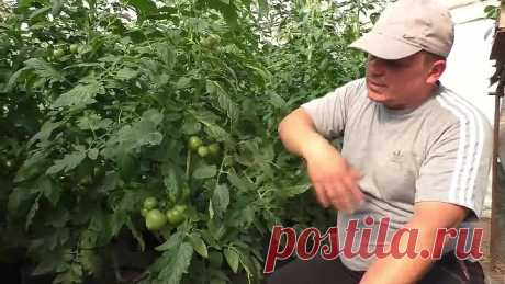 Никогда не удаляйте на томатах эти листья!!!