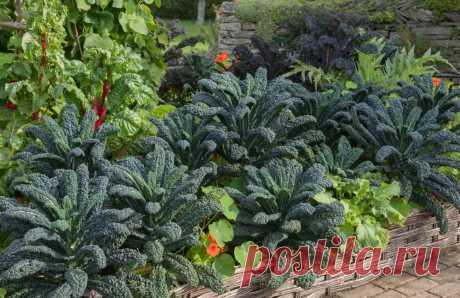 Два в одном: 9 растений для сада, которые одновременно украшают и приносят урожай