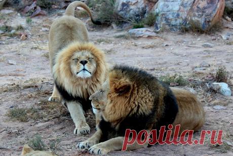 Тест. Определяем ваш хронотип. Кто вы — Лев, Медведь или Волк? | Блог издательства «Манн, Иванов и Фербер»