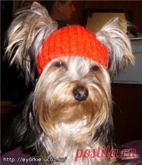 шапочка для собачек.