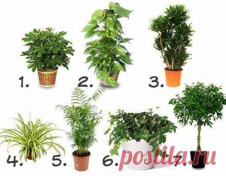 Комнатные растения, которые очищают воздух | ПолонСил.ру - социальная сеть здоровья