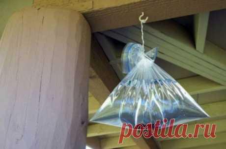 Интересный и почти бесплатный метод борьбы с мухами и комарами