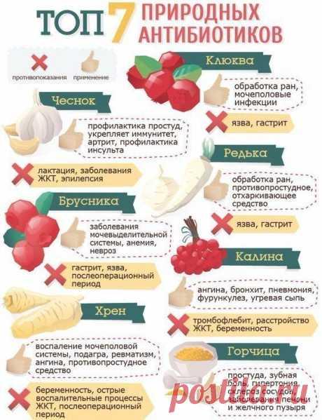 7 природных антибиотиков
