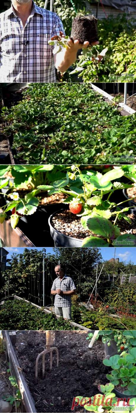Выращивание клубники на небольших площадях методом 3D-земледелия