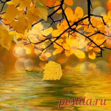 Осень золотая – текст песни про осень на слова В. Квач. Музыку к песне написал С. Ранда. Песню исполняет Женя Ранда.