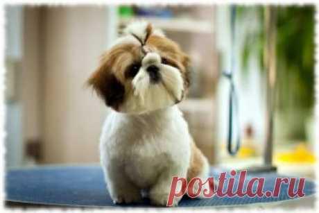 Las razas más encantadoras de los perros - los artículos Interesantes
