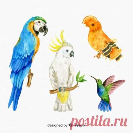Descarga gratis Set de pájaro exótico en acuarela Descubre miles de vectores gratis y libres de derechos en Freepik