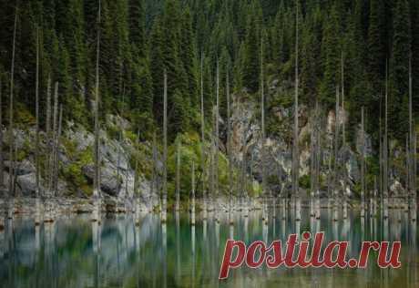 (+1) - Удивительный затонувший лес: озеро Каинды | УДИВИТЕЛЬНОЕ
