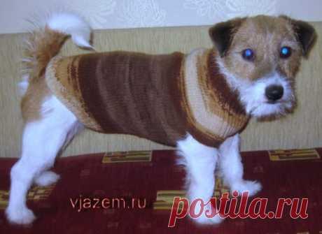 Masterklass: como vincular el jersey para el perro por los rayos | vjazem.ru