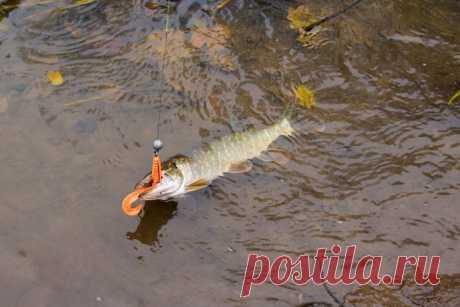Ловля щуки на спиннинг в октябре, какие хитрости и советы | На рыбалке | Яндекс Дзен