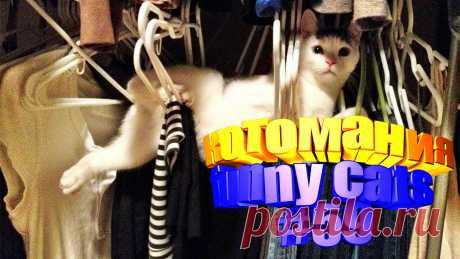 видео смешные коты, видео смешных котов, видео смешной кот, видео коты, видео для котов, том кот видео, коты воители видео, для кота видео, кота видео, смешные животные, смешные видео животных, смешное про животных, смешное видео животных, смешное животные, приколы с котами, прикол котов, приколы о кошках, кошки видео смешное, кошки смешное видео, смешное про кошек, смешное видео кошек, смешных кошек, кошки смешное, кошка смешно, смешное о кошках, кошек смешные, смешные кошка видео