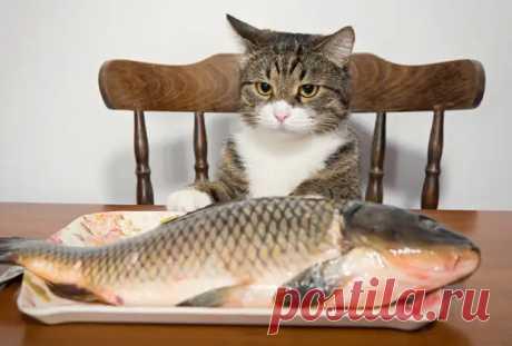 Как правильно кормить кошку - советы специалиста - ЖЕНСКИЙ МИР - медиаплатформа МирТесен