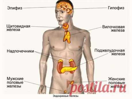 Старение организма начинается с эндокринной системы