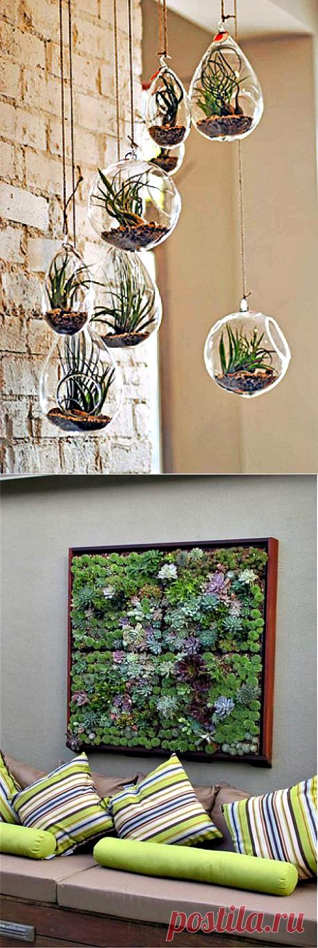 Цветущие стены: 20 сочных примеров вертикального размещения комнатных растений