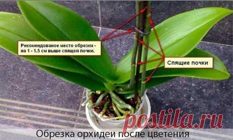ПРАВИЛЬНО обрезаем орхидею после цветения.