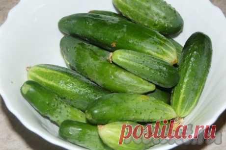 Холодный способ засолки огурцов - рецепт с фото
