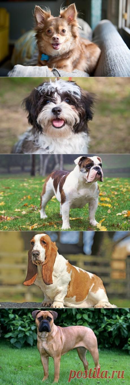 10 пород собак, за которыми легко ухаживать | PetTips