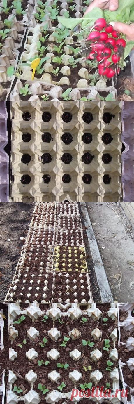 Редиска в яичных кассетах
