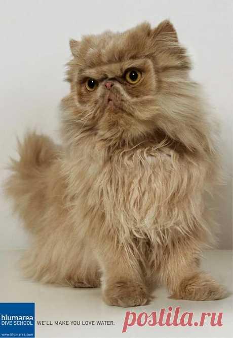 Реклама с котами: 11 самых странных примеров на грани трэша
