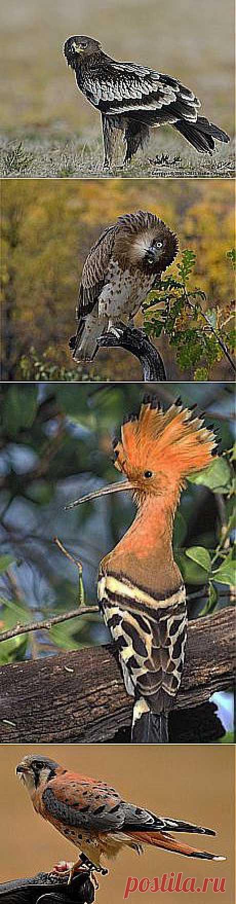 юрий павлов: Птички | Постила