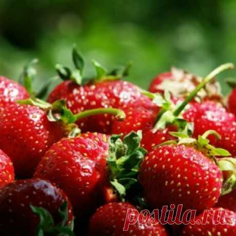 SUPER fertilizers for a rich harvest of strawberry