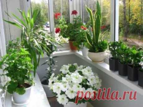 Всего 2 ингредиента - и Ваши комнатные растения будут расти намного лучше | Калейдоскоп | Яндекс Дзен