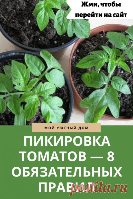 Зачем нужна пикировка томатов