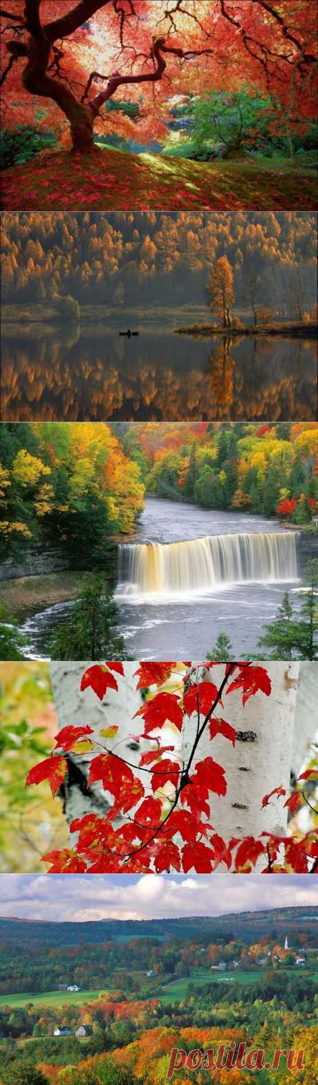 Краски Осени | В мире интересного