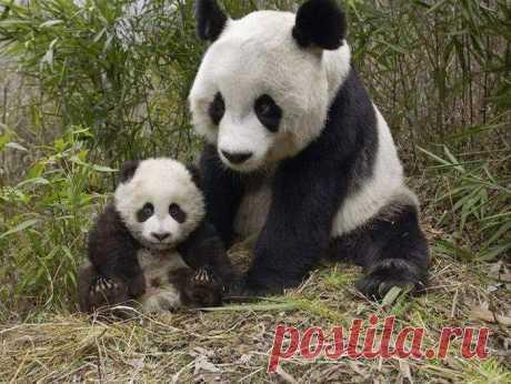 Мамы с детьми / Питомцы