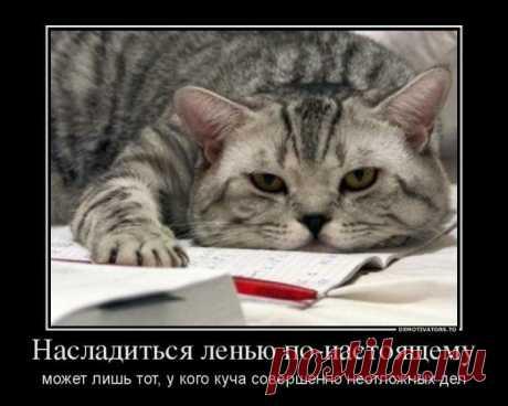 Демотиваторы с котиками