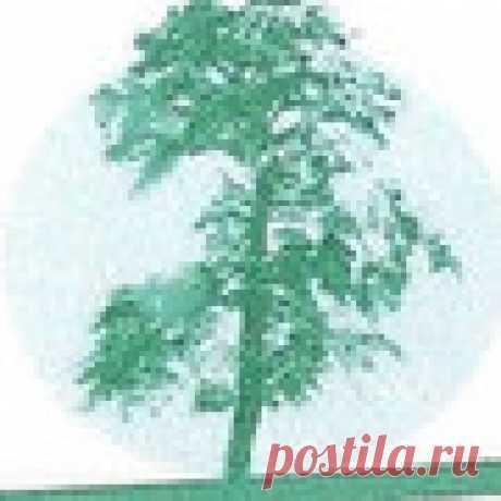 Инна Карпова